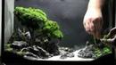 Quy trình tạo nên tác phẩm hồ thủy sinh Bonsai
