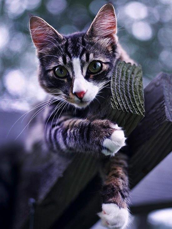 Какого цвета ваш котенок? Значение окраса кошки