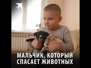 Мальчик, который спасает животных