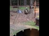 Raccoon Climbs Bird Feeder - 992121