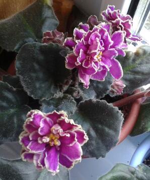 Цветы у Ликки -jKLpAFlLt0