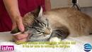 Измерение давления крови у кошки: правильные условия / Blood pressure measurement in the cat: getting the environment right