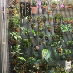 "Kevin Holcomb - Atlanta GA 🍑 on Instagram: ""A short video of my orchid cabinet, since I've gotten a lot of questions about it in the last few days...."