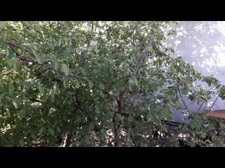 Алма ағашына прибивки жасау.mp4