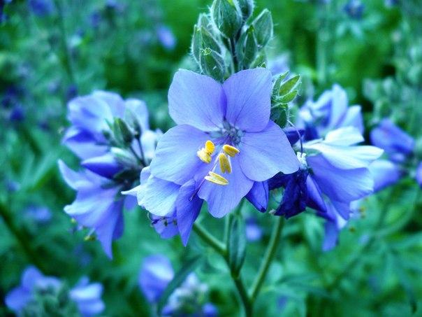 Кожен наступний запис про іншу квітку