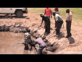 Спасание 5-дневного слоненка в национальном парке Кении. Трогательный маленький фильм.