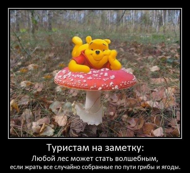 https://pp.vk.me/c616829/v616829449/f393/cMyYnf_3Puc.jpg
