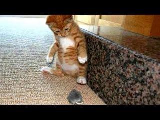 Странная реакция кошек на мышей и птиц