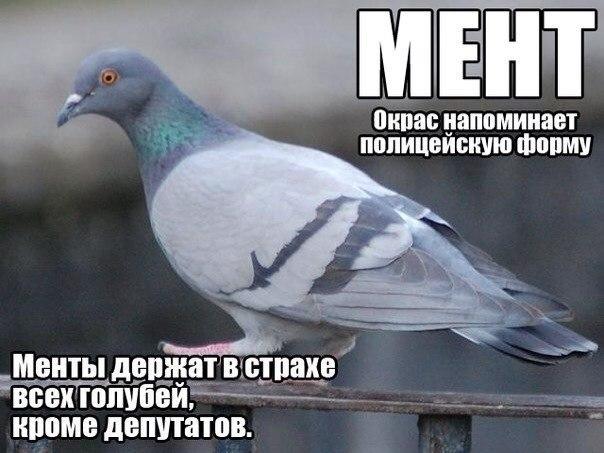 http://cs408426.vk.me/v408426811/8fd2/PoOf3hvfQm8.jpg
