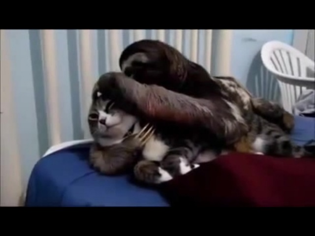 Кот узнает про безумие rjn epyftn ghj ,tpevbt