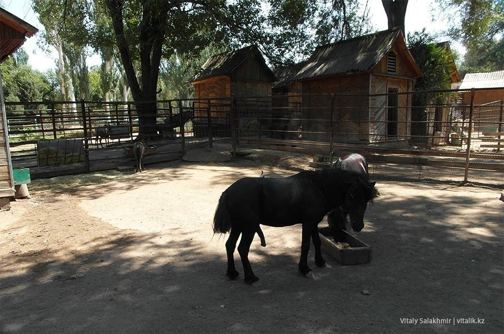 Пони в зоопарке Алматы, 2018