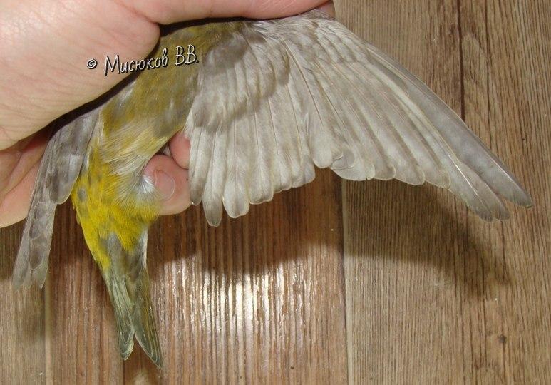 Фотографии моих птиц  - Страница 3 Qh44XqMNMEU