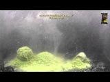 Прикормка Greenfishing Белая Рыба (холодная вода)