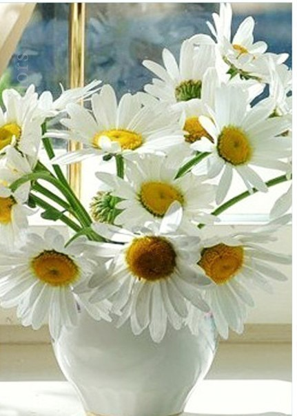 Подари мне облако ромашек! Этих светлых полевых цветов, В целом мире для меня нет краше Их чудесных белых лепестков! Серединка у ромашек - солнце, Согревает ласковым теплом, Даже когда дождик за оконцем Непогодою стучится в дом. Подари мне, Милый, эту радость! Вместо чопорных шикарных роз, Чтобы мысли мне явились сразу Переливом крылышек стрекоз; Абсолютным счастьем, вдохновеньем, Широтою рек, лесов, полей. От ромашек станет настроенье Воодушевленней, веселей. Подари мне легкость,…