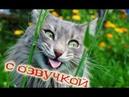 Приколы с котами с ОЗВУЧКОЙ – Я СМЕЯЛСЯ ДО СЛЁЗ – Самое смешное видео 2018!