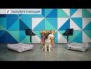 Хаски Флора TiTBiT Собаки в нашей жизни Интервью 3 Джек Рассел Терьер