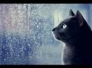 Дождь в Белгороде 25 Июля 2018 [Говорящая кошка]