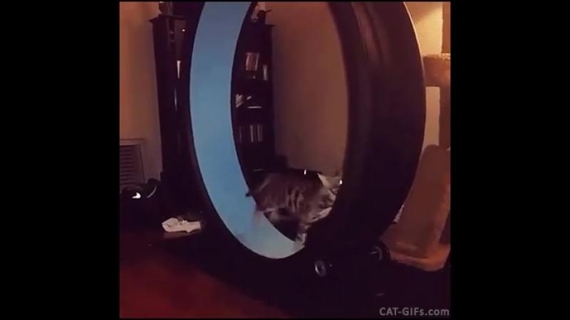 Как белка в колесе
