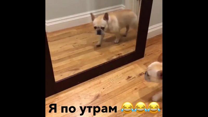 Алексей Воробьев: Когда утром увидел себя в зеркало 😂😂😂😂 09.11.2017