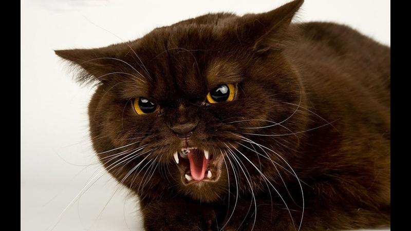 Потешные коты! Сборник приколов про котов 2014! Funny Cats Compilation 2014