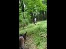 Часть пути проходящая по освежающему лесу