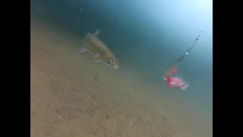 Таймыр подводное видео