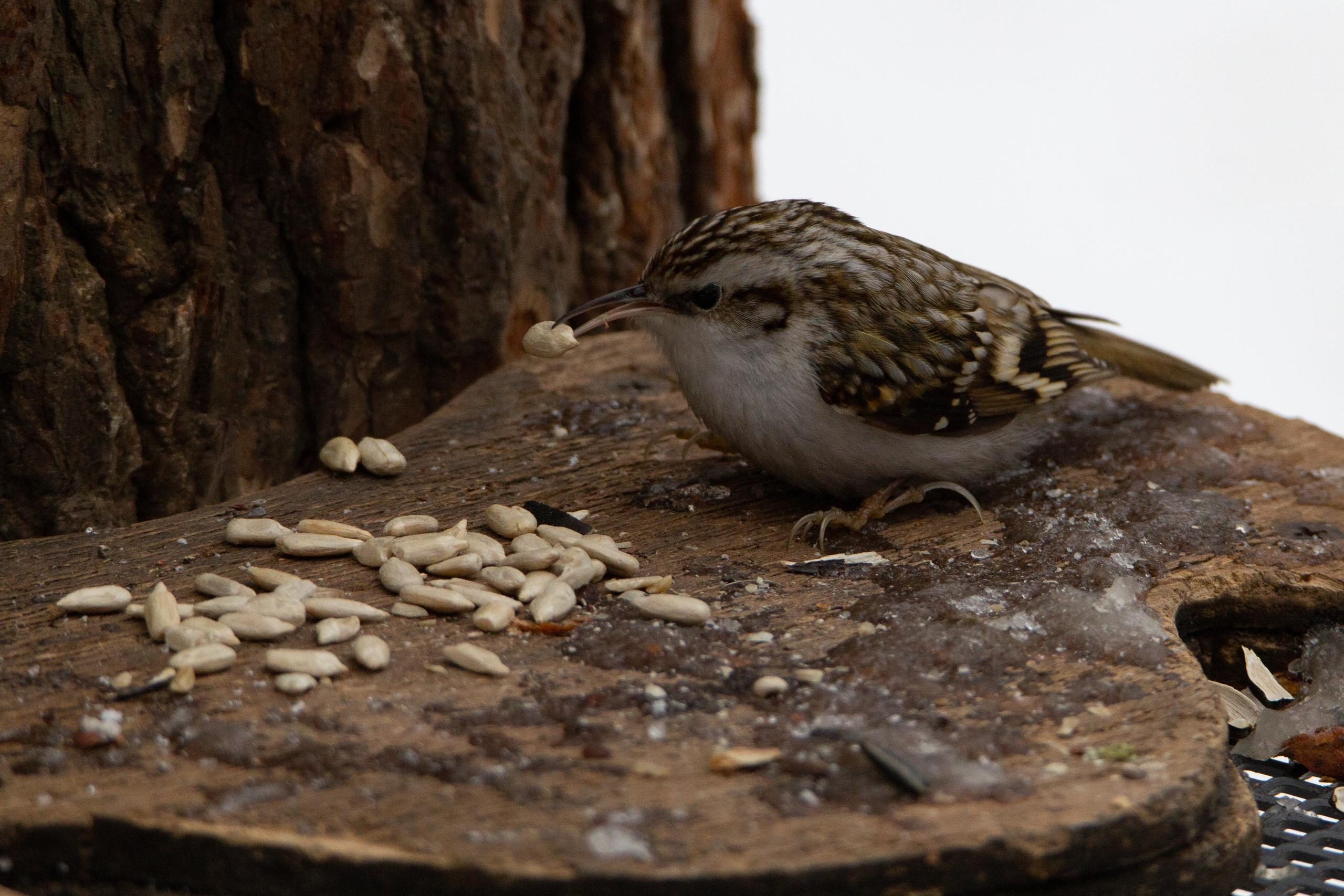 фамилия фамилия серая птичка с длинным клювом фото нужно сделать, чтобы