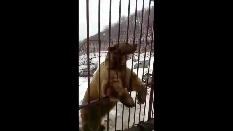 Медведь 🐻 разумный
