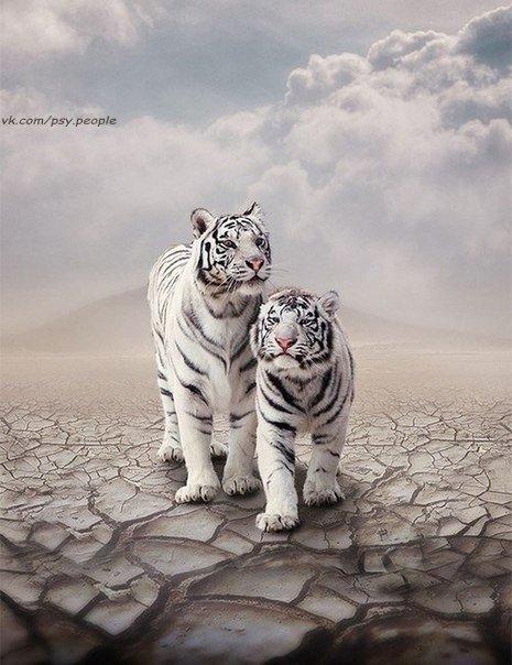 Животные мудрее нас...