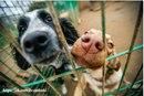 Мифы о собаках из приюта