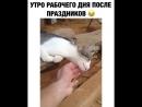Кот в ауте