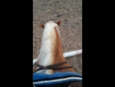 Езда без рук, кавалетти, вид сверху, вестерн трейл, ЦКО Караван, western trail
