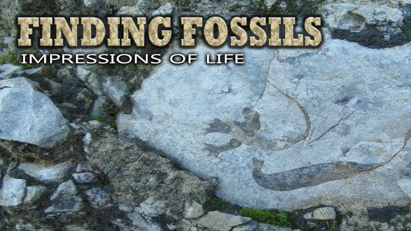 Finding Fossils - Impressions of life