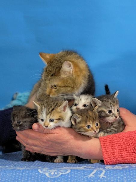 #нужна_финансовая_помощь@vmestepnz_animals #Мулита_ID27 НУЖ