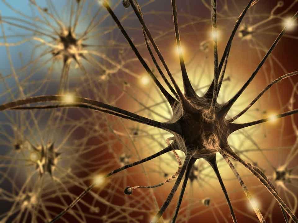 Роль автономной нервной системы?