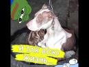 Почему хозяин этой собаки такой жестокий?