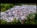 На Камчатке часть рекордного улова лососей находят выброшенным в лесу и на дорогах