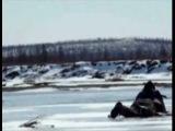 Ворошиловский стрелок   Охота на гусей в Якутии