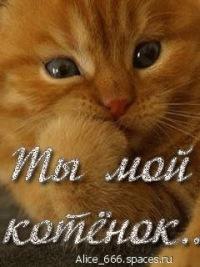 Аву, картинка с надписью мой котенок