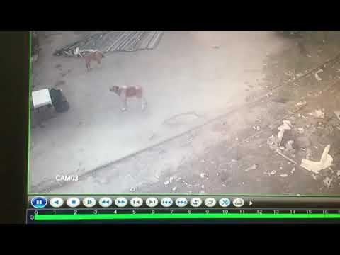 Человек против Собаки супер бой