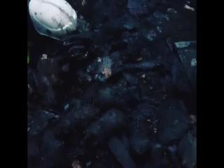 Пожарные спасли слепых щенков из горящего дома