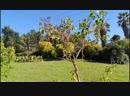 Сочи Парк Дендрарий Отдых в Сочи Природа Сочи Погода в Сочи Курорт Сочи Жизнь в Сочи