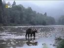 Дикая природа Волчья Гора Документальный фильм