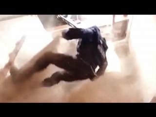 Спецназ врывается в квартиру мем.mp4