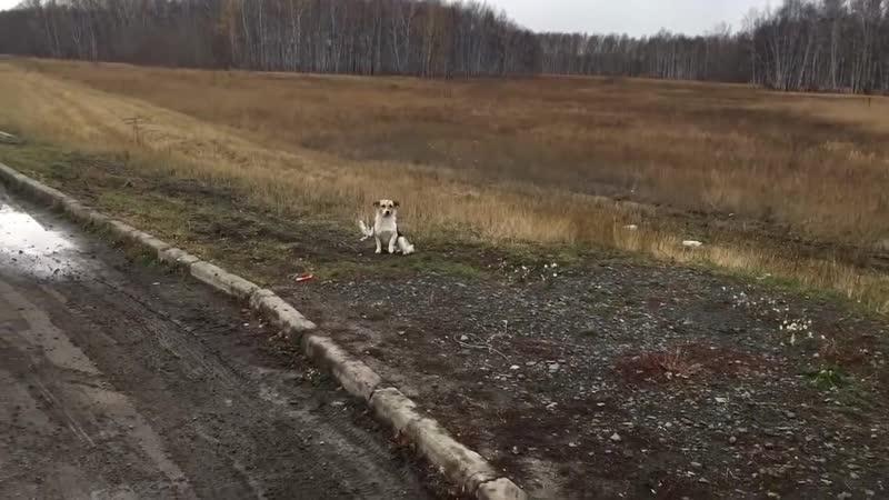 Хатико в Новосибирской области ждет своего хозяина