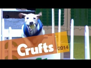 Flyball | First Quarter Final | Crufts 2014