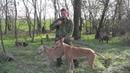Охотничьи истории Сезон 3 Охота на зайца с борзыми