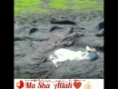 За доброе отношение ко всему живому - тебе воздастся благом Ин ша Аллаh