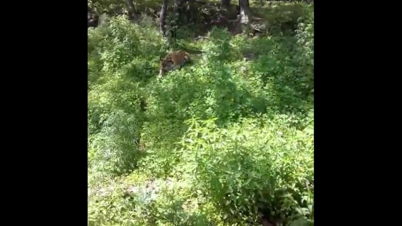 Тайга Видео samishina22