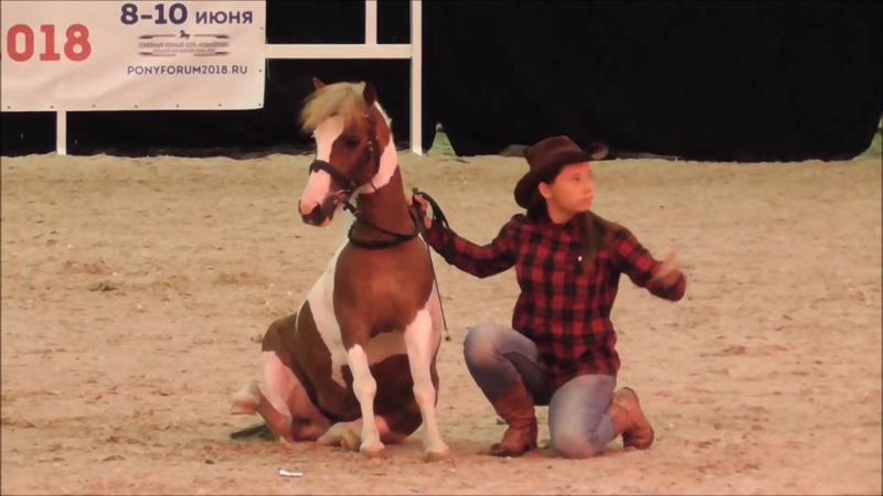 Ковбойский танец Конное шоу Иппосфера